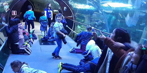 Aquariumera bisita